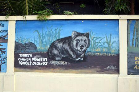 wombat: Wombat com�n. Pintada en la pared del parque zool�gico en Bangkok, Tailandia
