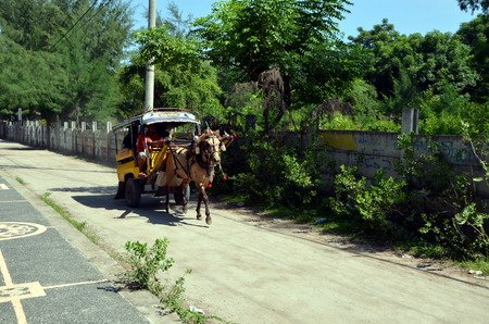cartage: Cartage on Gili Trawangan Indonesia. On Gili Islands in Indonesia there are only cycling and horsedrawn carts
