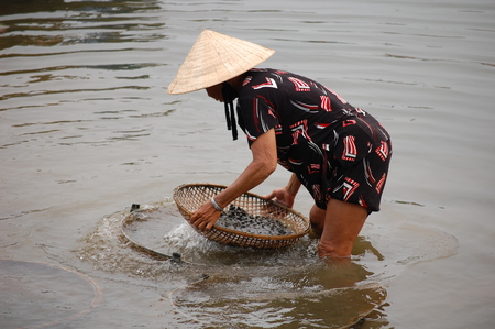 conical hat: A vietnamese woman in conical hat catches shells in the river