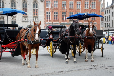 hitched: Horse-driven cabs -  beautiful horses  hitched to four wheel horse carriages.This is one of the main tourist attractions in the commercial heart of medieval-looking city of Bruges (Brugge), Belgium