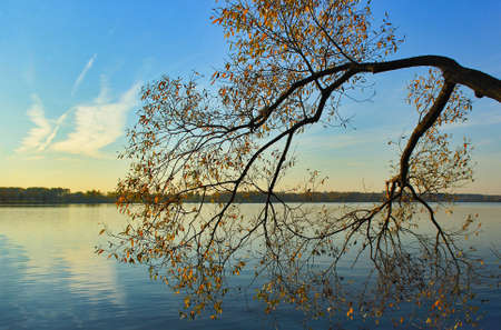 On the shore of the lake there are tree branches above the water surface. Autumn time Stock fotó - 155451697