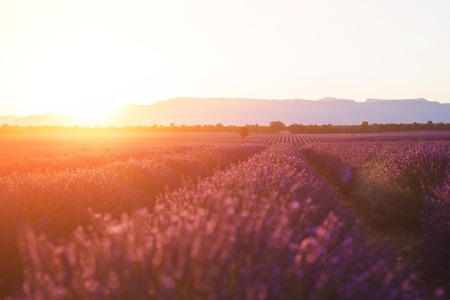 Beautiful frigid fields at sunset. Valensole, Provence, France Imagens