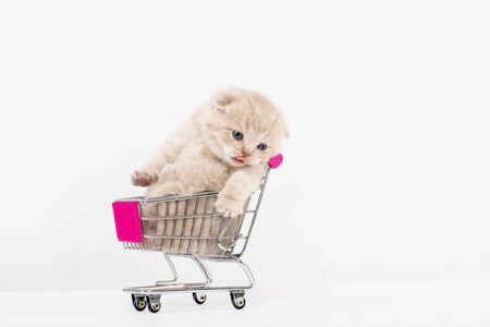 Beautiful british kitten in a shopping basket on a white background