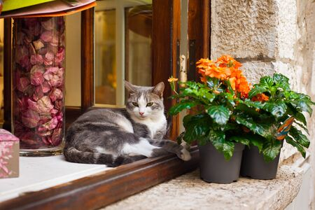 A cat lies on a window near a flower in a pot in the village of Saint-Paul-de-Vence in southern France