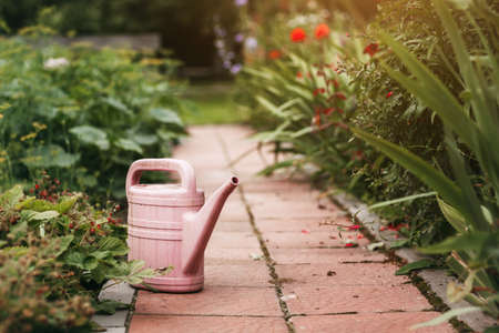 A pink watering can stands among beautiful flowers and flower beds.