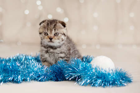 A small tabby kitten with blue tinsel and white Christmas balls. Gift, holiday, happiness. Christmas and New year concept, place for text