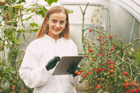 A woman scientist in a white coat and glasses examines a sample of a plant through a magnifying glass while checking the quality of cherry tomatoes in a greenhouse. Scientific research