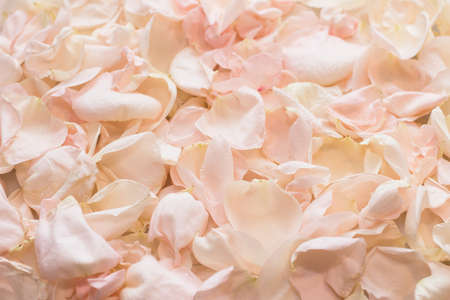 Heap of petals of pink roses with water drops for background. Ð¡ut flowers second life. Blurred focus. Close up.