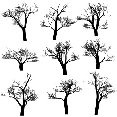 silhouettes: Trees silhouettes, isolated on white background Illustration
