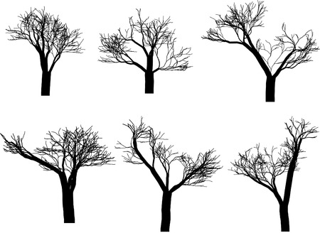 silhouettes: Tree silhouettes