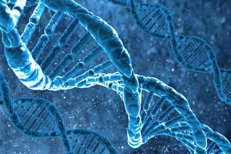 The DNA molecule photo