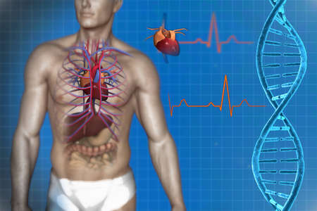 blood circulation: circulatory system of the heart and DNA