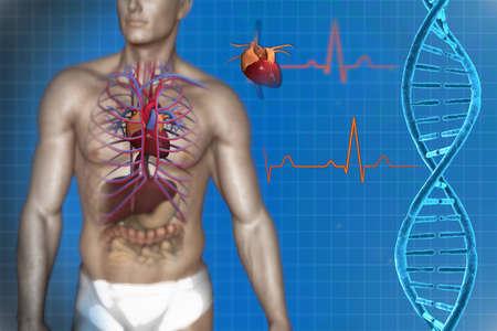 vasos sanguineos: sistema circulatorio del corazón y el ADN