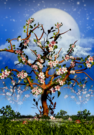 Cherry Trees Blosom and full moon night