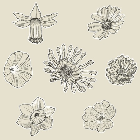 calendula: Set of seven graphic flowers. Hand drawn floral design.