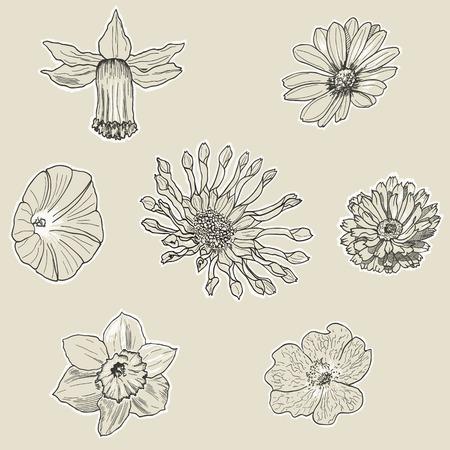 osteospermum: Set of seven graphic flowers. Hand drawn floral design.