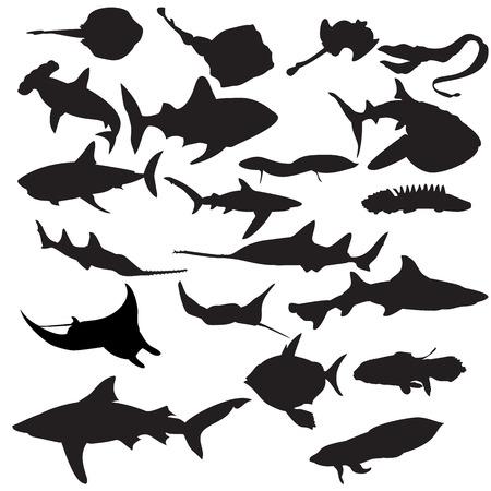 lungfish: Fish silhouettes. Illustration
