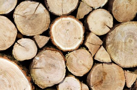 woodshed: Oak logs cutted and stacked. Wooden background. Stock Photo