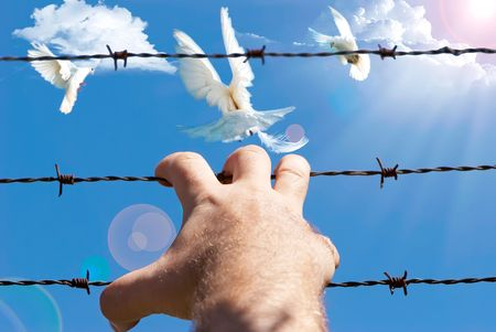 Mens hand holding onto the barbed wire on a background of sky with pigeons photo