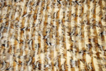 visone: Closeup di bella pelliccia volpe e visone