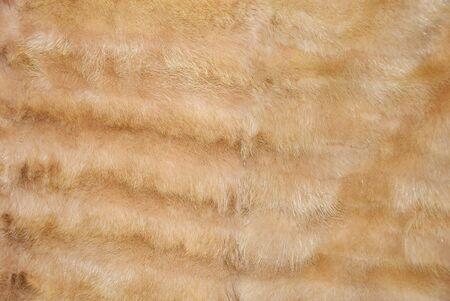 peltry: Closeup of a beautiful mink fur background