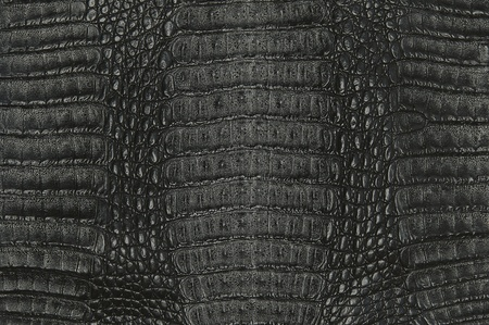 crocodile skin texture background Stock Photo