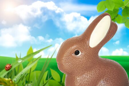 bunnie:  delicious easter bunnie, made of chocolate on natural backgound