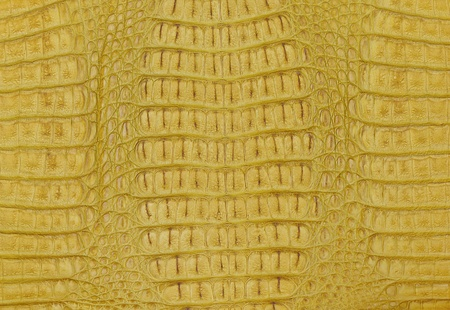 crocodile skin texture background photo