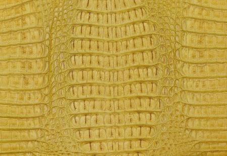 crocodile skin texture background Stock Photo - 11849834
