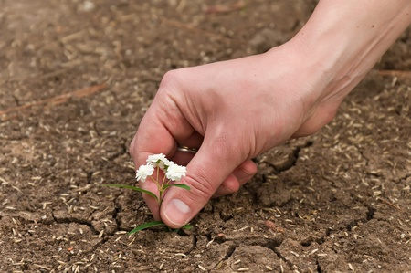 Plant in the sandy desert . New life born in human hand photo