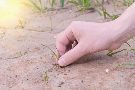 Green plant in the desert dry and cracked New life born in human hand photo