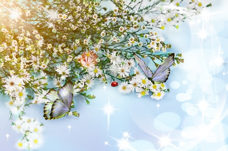 Beautiful chamomile flowers with butterflies photo