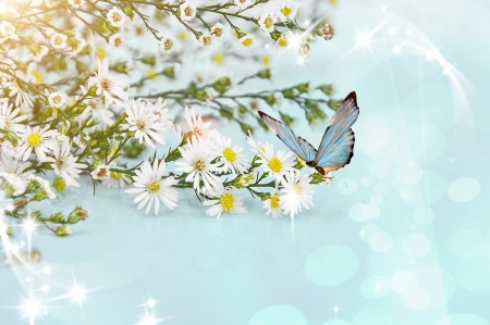 Beautiful flowers of chamomile sun and butterfly photo