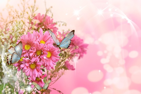 two butterfly on flowers photo