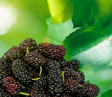 Ripe blackberries on bark in the forest photo
