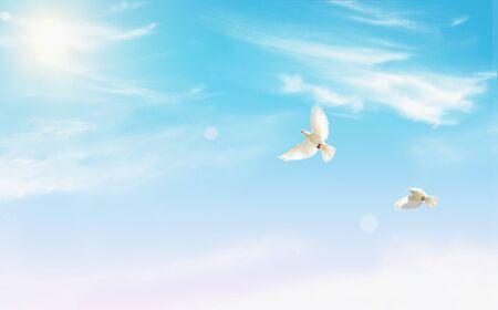 witte duif, gras en lucht. Achtergrond Stockfoto