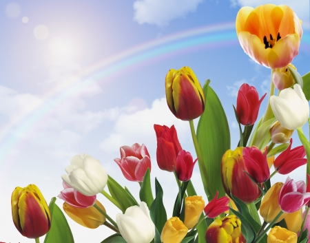 Beautiful spring flowers with rainbow photo