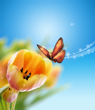 Tulip with butterfly photo