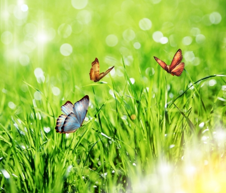Green grass, butterfly photo