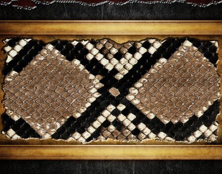 Background snake leather with a buckle and frame photo