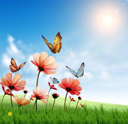 exotic butterflies: Flores de primavera con las mariposas ex�ticas, cielo azul profundo con el arco iris