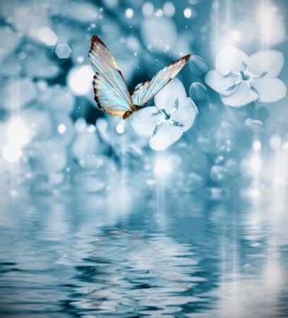 mariposa sobre fondo azul oscuro