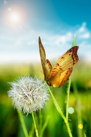 Dandelion with butterfly summer day Stock Photo