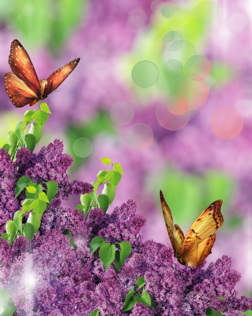 wit lila vlinders Stockfoto
