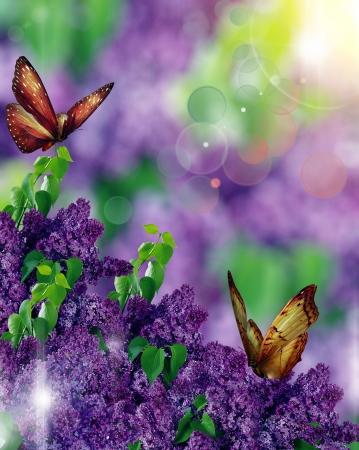 mooie lila vlinders