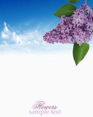 Lilac hemel achtergrond