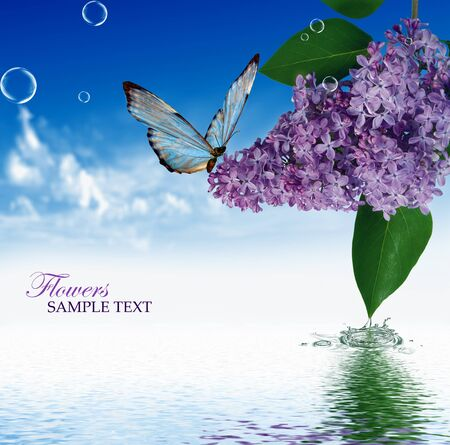 Lilac sky background with butterfly photo