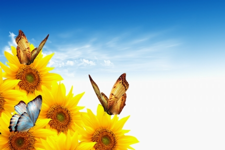 Zonnebloem achtergrond met vlinders