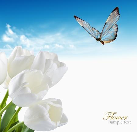 Prachtige lente bloemen