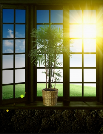 empty interior with green tree  Stock Photo - 17083017